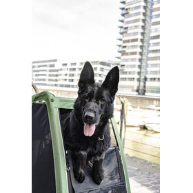 Croozer Dog XXL Hundeanhänger kieferngrün